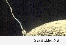 Vina Models | Dư lượng thuốc trừ sâu trong rau và trái cây có thể làm giảm chất lượng tinh trùng ở đàn ông. http://ift.tt/1OnBjnu o:)